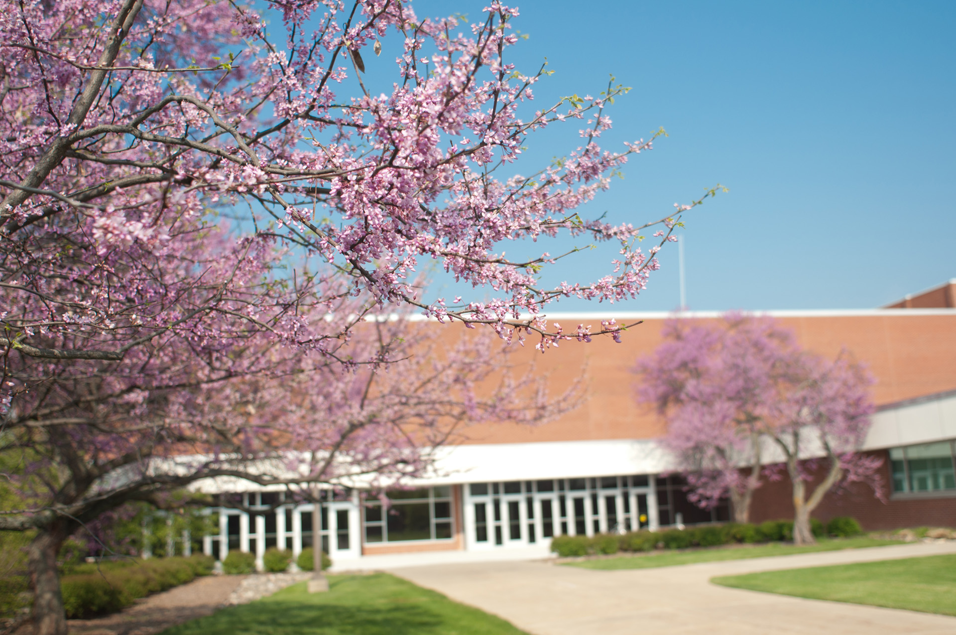 Flowering trees at the Main Campus